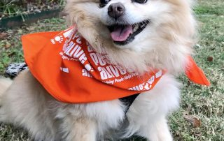 "Pixie the dog wearing an ""Austin Pets Alive"" bandana"